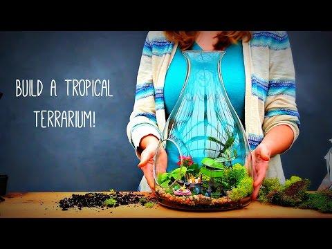 How to Build a Tropical Terrarium