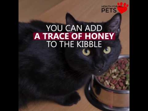 RAW HONEY FOR CATS WITH ALLERGIES