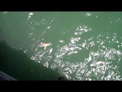 Shark Fishing in Myrtle Beach
