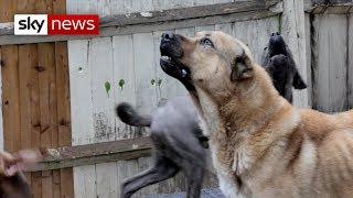 Special Report | How dangerous dogs are dealt with in the UK