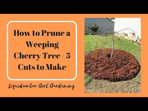 How to Prune a Weeping Cherry Tree - 5 Cuts You Should Make