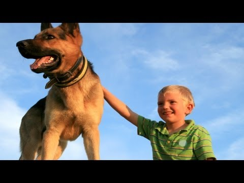 What Are Seizure-Alert Dogs? | Epilepsy