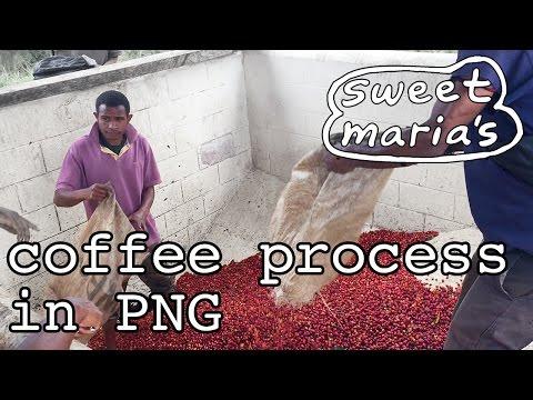 Coffee Processes in Papua New Guinea