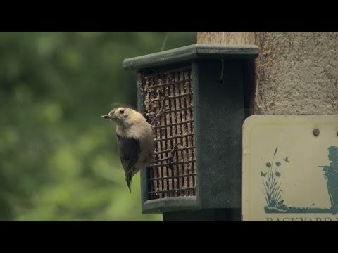 Back Yard Birding - how to attract birds to your home | Indiana DNR