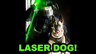 Genius Dog Learns to use LASER!