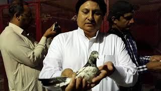 جرول بھائی کی چھت کا وزٹ جدہ سعودی عرب میں Ustad Boota Farooq pakistani pigeons
