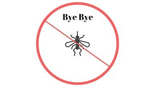 Get Rid Of Fungus Gnats For Good Actually Works