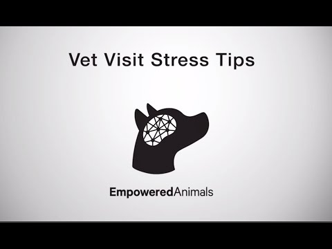 Vet Visit Stress Tips - How to Lower Your Dog's Fear at the Vet | Grisha Stewart (10 mins)