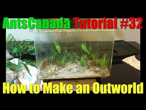 How to Make a Simple Outworld - AntsCanada Tutorial #32