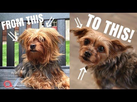 HOW I CUT MY DOGS HAIR WITH ONLY SCISSORS! DIY DOG GROOMING | diiixonn