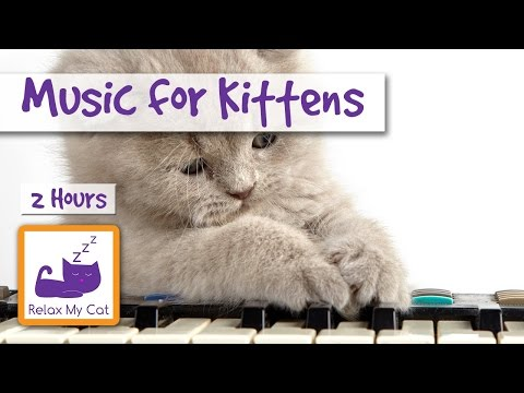 2 HOURS of Music for Newborn Kittens And Pregnant Cats! 🐱 #PREGNANT04