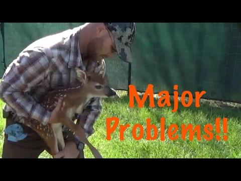 Whitetail Deer Farming