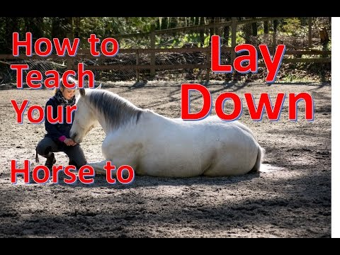 How to teach your horse to LAY DOWN [NO ROPES] (Re Explained)