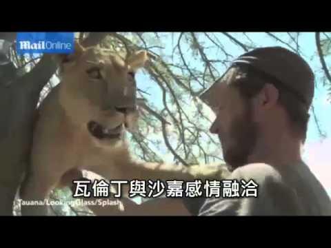 母獅衝向男子 只為給他一個擁抱--蘋果日報 20150128