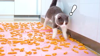 Can Cats Walk On Pasta?
