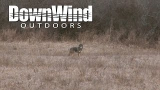 Eastern Coyote Hunting: No Escape (DownWind Outdoors)