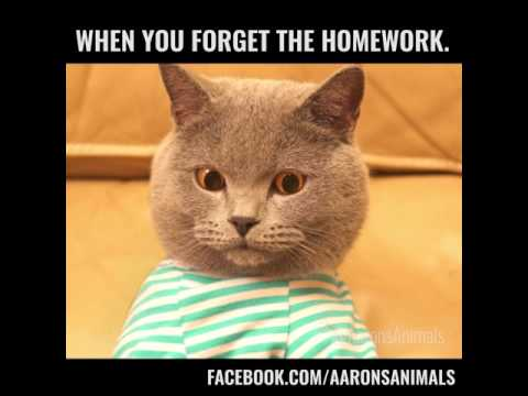 When you forget your homework By Aaron's Animals