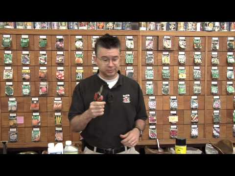 Fruit Tree Fungus Treatment  - Anderson's Seed & Garden