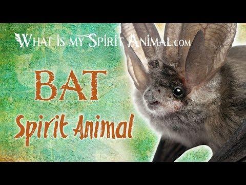 Bat Spirit Animal | Bat Totem & Power Animal | Bat Symbolism & Meanings