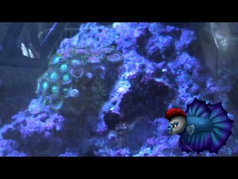 How To Get Amazing Results From Your Zoanthids