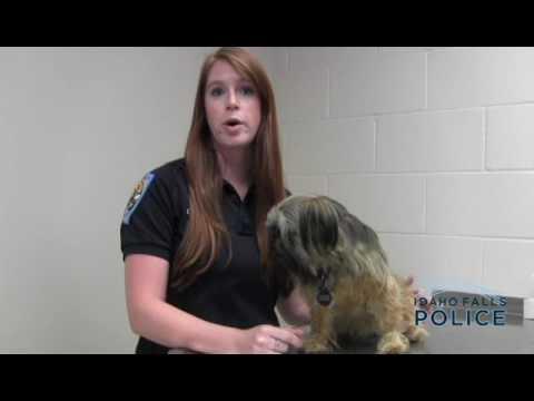 Idaho Falls Dog License Law