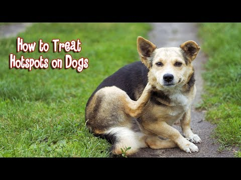 How to Treat Hotspots on Dogs