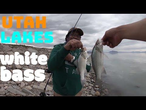 white bass and catfish fishing: utah lake fishing 2018