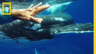 Was This Whale Trying to Save a Diver's Life? | National Geographic