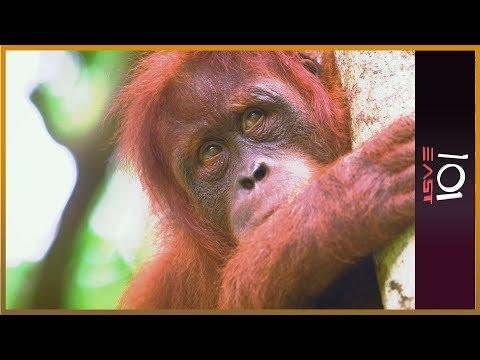 🇦🇺 The Orangutan Whisperer | 101 East