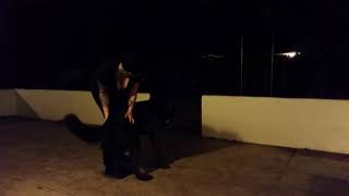 Conversations with a Wolfdog
