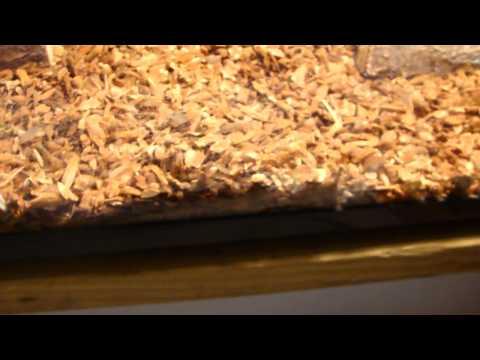Box Turtle set up