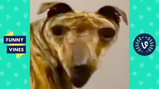 PUT THIS FILTER ON YOUR DOG 😂 | FUNNY DOGS