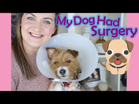 My Dog Had Surgery, Cruciate Ligament Surgery, Recovery Tips, Vet Advice (2018) | Claire Tutorials
