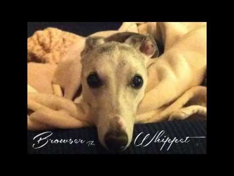Browser The Whippet: Congestive Heart Failure