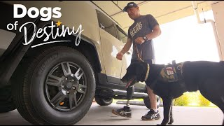 Something to Prove | Dogs of Destiny