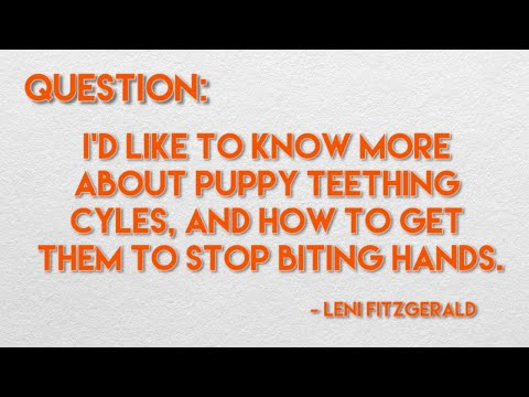 How To Stop Puppies From Biting - Ask Dr. Andy