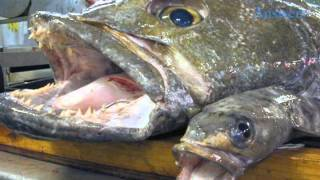 Fish That You Should Probably Stop Eating