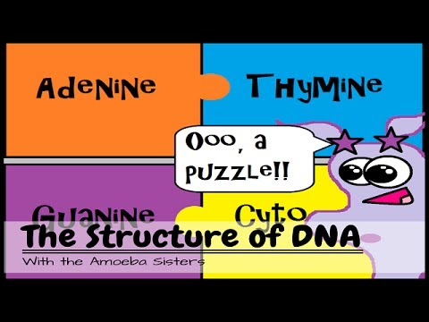 (OLD VIDEO) DNA Structure and Function