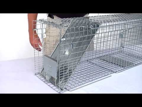 How to Set: Havahart® Feral Cat Trap Model #1099