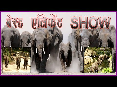 The Best  Elephant Show  in Singapore Zoo.