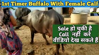 How to increase fat in cow/Buffalo milk | गाय/भैंस