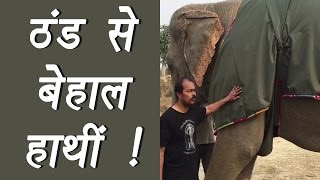 Elephants recused from cold by using Jumbo Jackets; Watch Video   वनइंडिया हिंदी