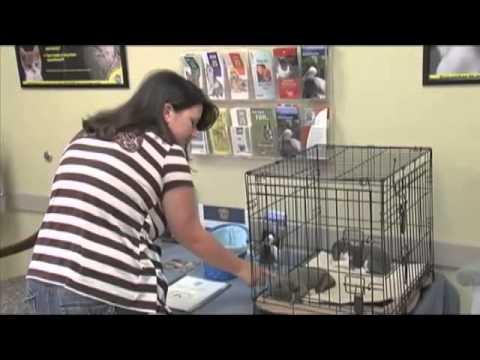 Become a foster pet parent