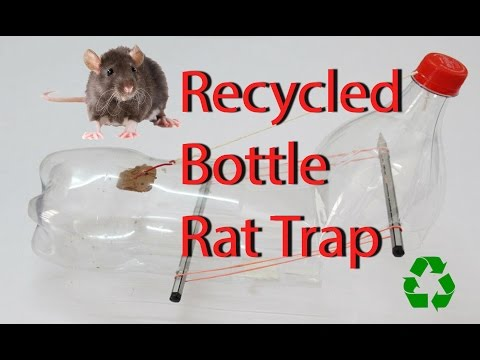 Home Made Mouse Trap from a Coke Bottle