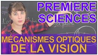 Mécanismes optiques de la vision - Sciences 1ère ES/L - Les Bons Profs