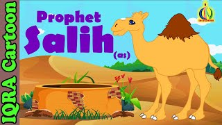 Salih (AS) - [Prophet story ( No Music)] - Islamic Cartoon