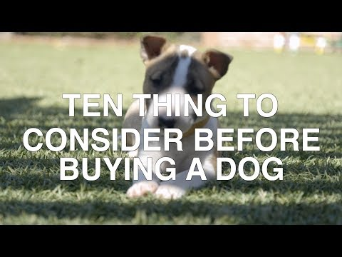 Xxx Mp4 TEN THINGS TO CONSIDER BEFORE BUYING A DOG 3gp Sex