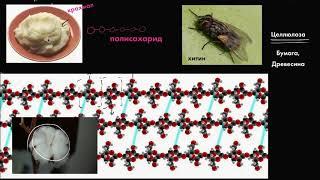 Download Гидролиз (видео 7)  Макромолекулы   Биология Video