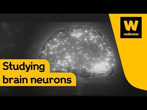 Unseen Ideas #1: NeuroPixel probes - Making sense of the 70 billion neurons in the brain