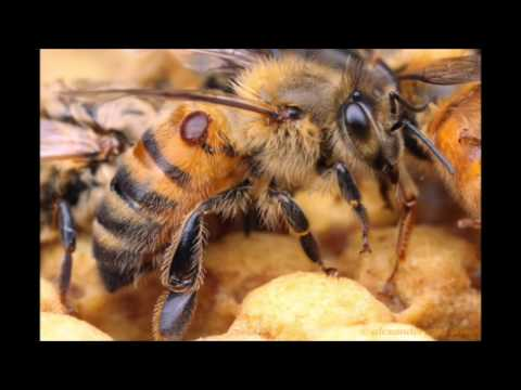 Care For Yourself, the Bees and the Planet